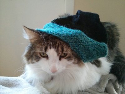White-and-grey cat in a green-and-black hat.
